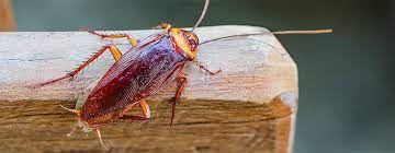 Knowing About Safe Cockroach Termination